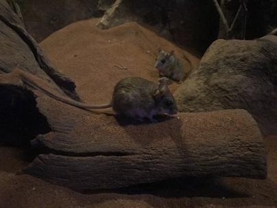 動物園・ネズミ.JPG